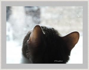 P102-Plume-Gazelle-le-chat
